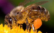 Τι πρέπει να κάνετε αν σας τσιμπήσει μέλισσα ή σφήκα;
