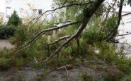 Προβλήματα με πτώσεις δέντρων από τους ισχυρούς ανέμους στη Θεσσαλονίκη
