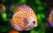 Συναγερμός για τη θαλάσσια ζωή: Το 17% των ζώων θα εξαφανιστεί έως το 2100
