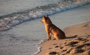 Επιτρέπεται να πάρω τον σκύλο στην παραλία για μπάνιο; Τι προβλέπει ο νόμος