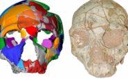 Ένα κρανίο 210.000 ετών από την Ελλάδα το αρχαιότερο δείγμα σύγχρονου ανθρώπου σε όλη την Ευρασία