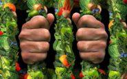 Όταν η υγιεινή διατροφή εξελίσσεται σε επικίνδυνη εμμονή