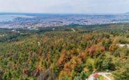 Κινδυνεύει το Σέιχ Σου – Με αργούς ρυθμούς η κοπή των ξηραμένων δέντρων από το φλοιοφάγο έντομο