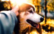 Συμβίωση σκύλου και ανθρώπου: Mε αφορμή μια ανείπωτη τραγωδία