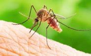 Στην Ελλάδα τα πιο πολλά κρούσματα ιού του Δυτικού Νείλου στην Ευρώπη