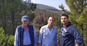 Στην τελική ευθεία η παρέμβαση στις δασικές εκτάσεις  που προσβλήθηκαν από το φλοιοφάγο έντομο