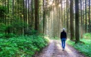 Ταξιδεύοντας στα ομορφότερα δάση του κόσμου