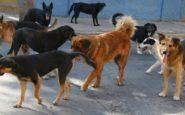 Η οικογένεια του 22χρονου που δέχτηκε επίθεση από αγέλη σκύλων στο Σέιχ Σου