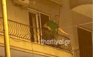 Θεσσαλονίκη: Βγήκε στο μπαλκόνι μεθυσμένος και πετούσε γλάστρες σε θαμώνες μπαρ (VIDEO)