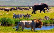 Η έκτη μεγάλη εξαφάνιση των ειδών έχει μόνο ανθρώπινη σφραγίδα
