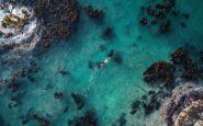 Παγκόσμια πρεμιέρα της ταινίας του Netflix «Τι μου έμαθε ένα Χταπόδι» στη Θεσσαλονίκη