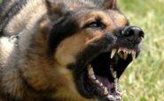 Κάθε 9 λεπτά ένας άνθρωπος χάνει τη ζωή του από λύσσα
