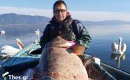 """Θεσσαλονίκη: Έπιασαν ψάρι-""""γίγας"""" 85 κιλών στη λίμνη Βόλβη"""