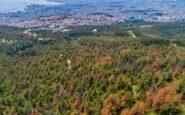 Αφορά και τον Δήμο Ωραιοκάστρου: Συναγερμός για πανδημία από σκαθάρι που τρώει τα δέντρα