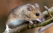 Νέος εφιάλτης: Ο ιός «Τσαπάρε» προέρχεται από ζώα, μεταδίδεται από άνθρωπο σε άνθρωπο και δεν έχει θεραπεία!