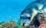 """Αλόννησος: Σκότωσαν με ψαροντούφεκο τον """"Κωστή"""" τη φώκια – μασκώτ του νησιού"""