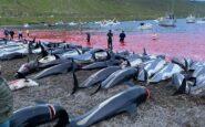 Η μεγαλύτερη σφαγή δελφινιών όλων των εποχών